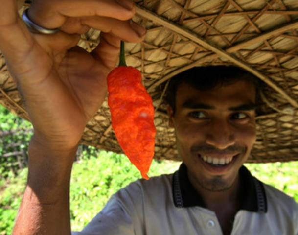World's Hottest Chili. Image credit AllVoices