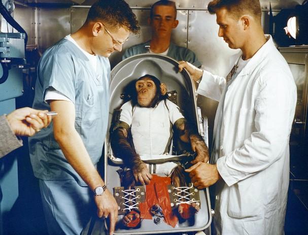 chimp_t607